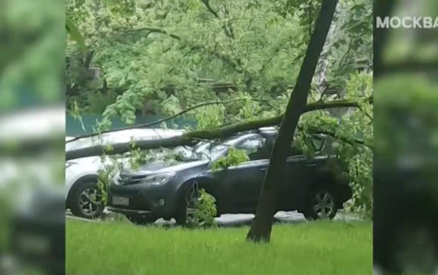 """На улице Барклая дерево задело сразу две машины. Фото скриншот видео """"Москва 24"""""""