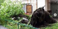 Москвичи поделились фотографиями поваленных деревьев