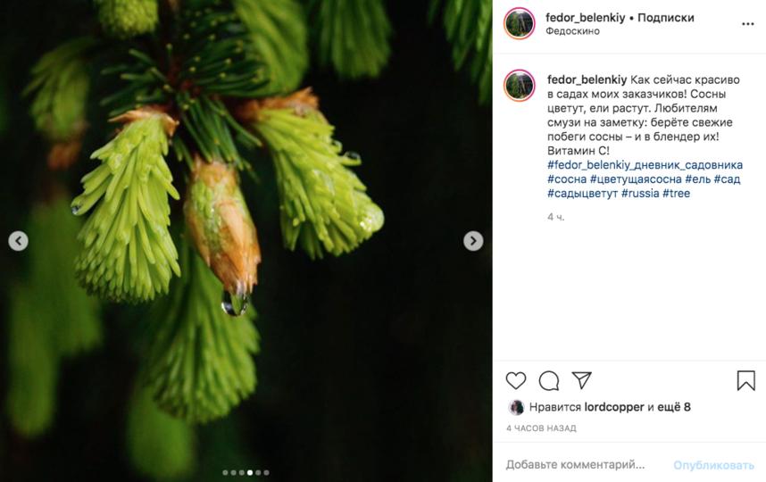 Ёлочка с молодой хвоей. Фото скриншот Instagram @fedor_belenkiy