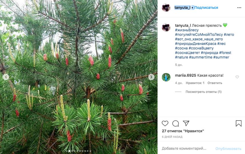 """""""Лесная прелесть"""". Фото скриншот Instagram @tanyuta_l"""