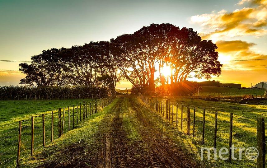 Новая Зеландия. Фото Pixabay