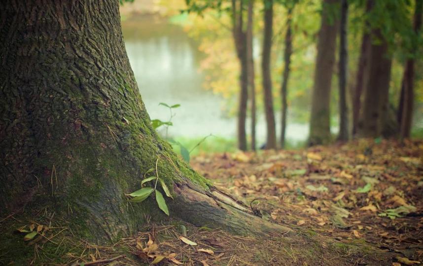 """Парки и леса в Петербурге остаются закрытыми. Фото pixabay.com, """"Metro"""""""