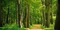 МегаФон организовал противопожарное наблюдение за лесами России