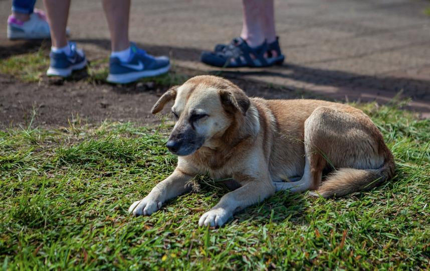 Шестеро детей в возрасте от 6 до 12 лет пострадали от нападения бездомной собаки. Фото Pixabay