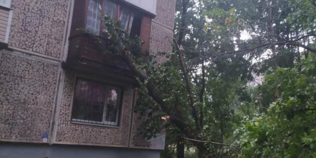 Последствия грозы в Петербурге.