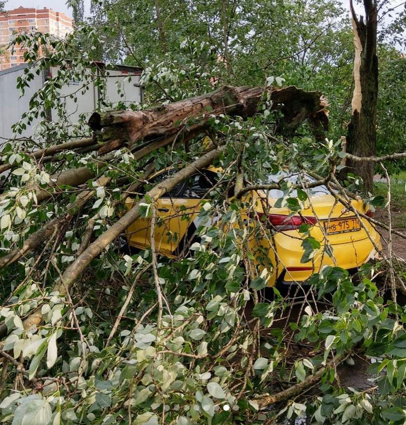 Основная причина забитых ливнёвок –оторванная листва. Фото Instagram @beauty_school_msc