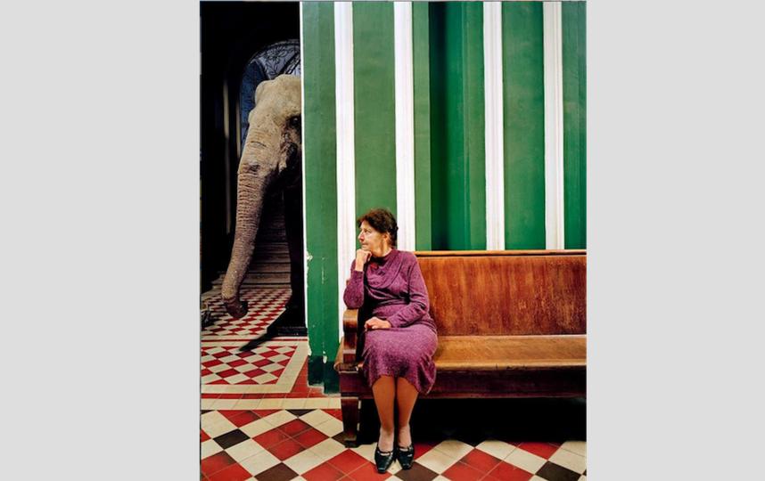 Снимок, названный «Слон!», сделан в Зоологическом музее в Москве. На заднем плане чучело слона.. Фото Франк Херфорт / frankherfort.com