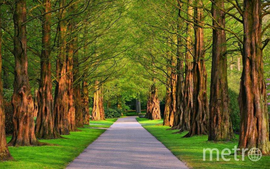 """Горожане теперь могут проводить время во многих парках и скверах. Фото pixabay.com, """"Metro"""""""