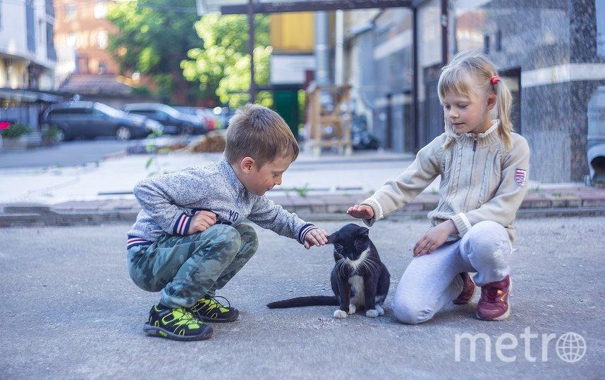 Гусев отметил, что если поправки будут приняты, в сферах традиционной семьи и жизни российских детей появится новый козырь. Фото pixabay