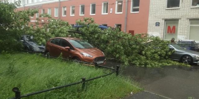 Дерево упало на Васильевском острове.