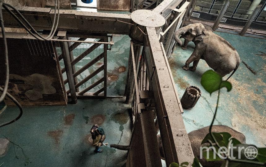 Питомцы во время карантина. Фото zoo.museum-online.moscow/ Михаил Киракосян