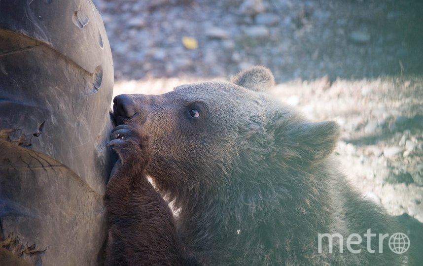 Медвежонок. Фото pixabay