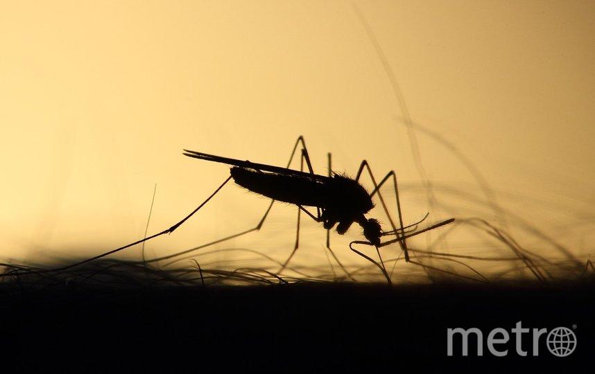 """Комары, изученные в ходе исследования, были собраны по всей Финляндии в период между 2013 и 2018 годами. Фото pixabay.com, """"Metro"""""""