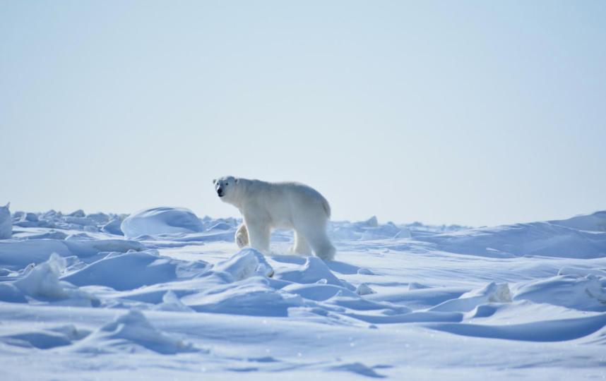 Фото экспедиции «Медвежьего патруля». Фото WWF России