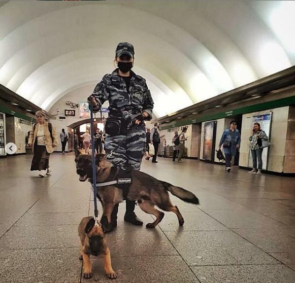 """Ряды петербургских полицейских пополнились хвостатыми сотрудниками. Фото Скриншот Instagram: @spb_police, """"Metro"""""""