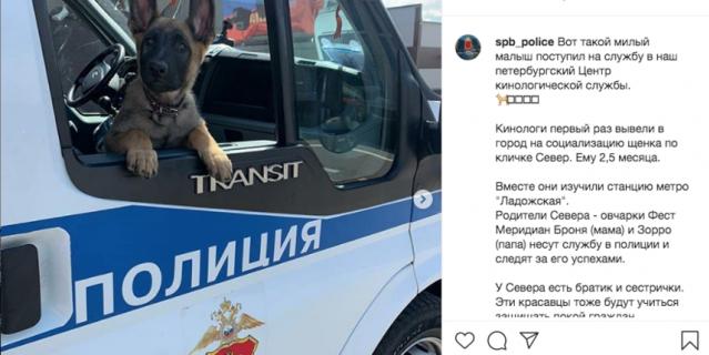 Ряды петербургских полицейских пополнились хвостатыми сотрудниками.