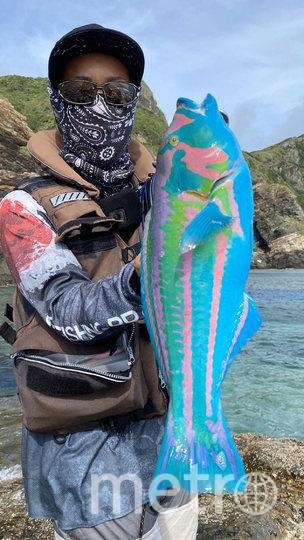 Рыба Thalassoma Cupido яркая, потому что ест кораллы. Фото twitter @azusa54