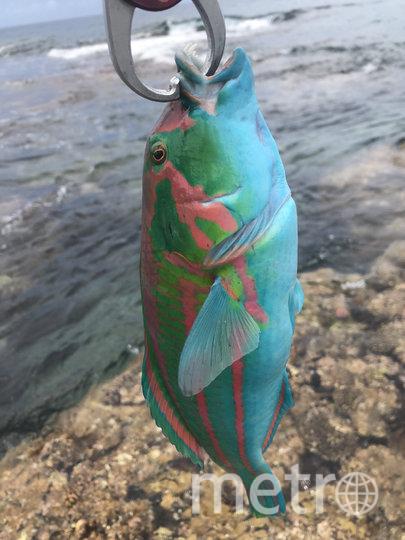 Рыбу в кулинарии не используют. Фото twitter @azusa54