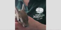 В Московском зоопарке родились детёныши чакоанской мары