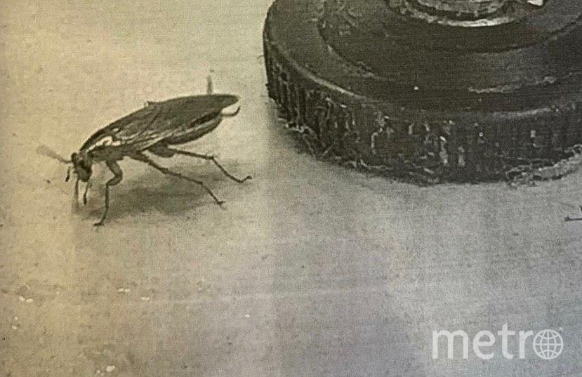 На столе в кафе нашли таракана. Фото Объединенная пресс-служба судов Петербурга.