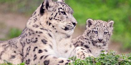 Милые снимки животных со своими семьями растрогают любого – фотоподборка