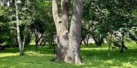 Парк с дубовой рощей на западе Москвы стал камнем преткновения