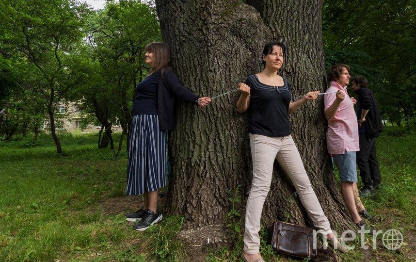 Чтобы обхватить древний дуб на улице Ивана Франко, не хватит и троих человек. Фото Вадим Кантор
