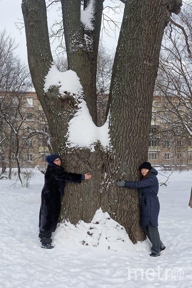 Чтобы обхватить древний дуб на улице Ивана Франко, не хватит и троих человек. Фото Алексей Шульгин