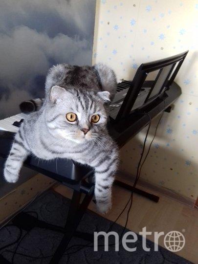 """Мой кот артист, нашего кота зовут Лакки он очень любит сидеть на синтезаторе когда мой сын хочет поиграть на нем так он ему помогает. Фото """"Metro"""""""