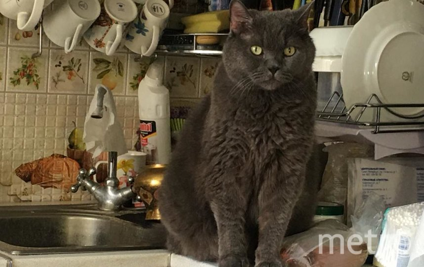 """Посуду помыл,что еще желаете? Фото """"Metro"""""""