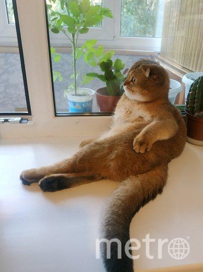 """Вот что значит лечь поудобнее!) Скорее всего кот Ричи изображает Обломова. Фото Ольга Семенова, """"Metro"""""""