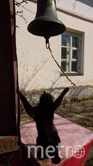 """Кот Спиридон в образе пирата: """"Берём на абордаж! Нас ждет добыча!"""". Фото Светлана Садко, """"Metro"""""""