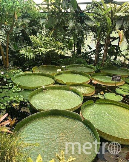 """Ботанический сад МГУ """"Аптекарский огород"""" открывает свои двери для посетителей 11 июля. Фото предоставленно пресс-службой сада"""