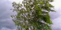 Штормовой ветер в Петербурге повалил деревья: есть пострадавшая