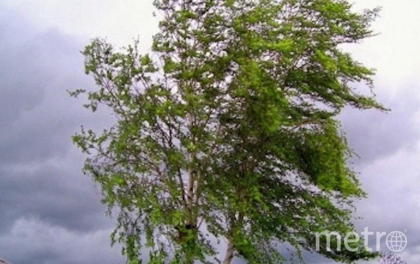 В Петербурге ожидается сильный ветер. Фото 78.mchs.gov.ru/