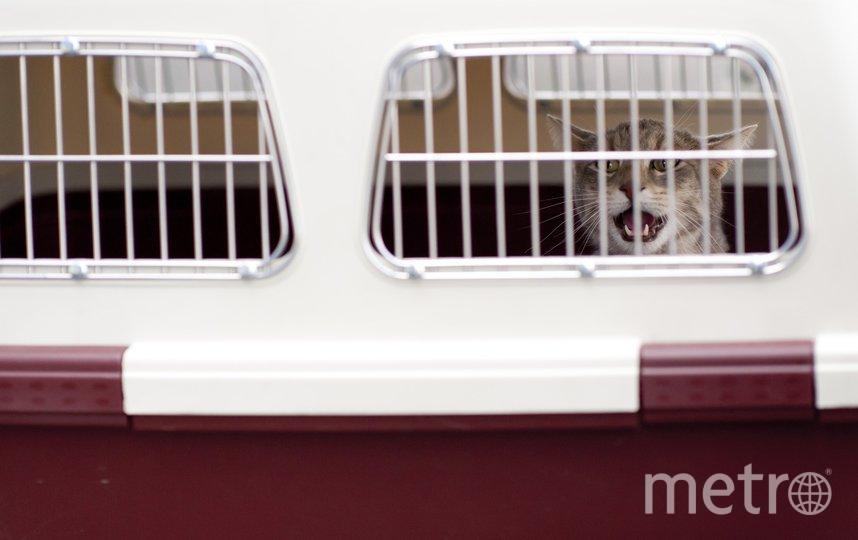 Изначально животные должны были улететь одним рейсом с хозяевами 4 июля. Архивное фото. Фото pixabay.com