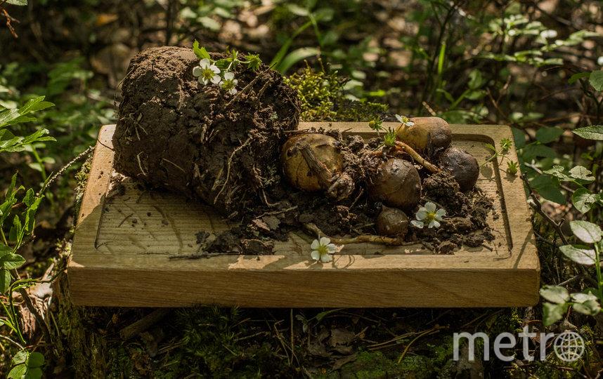 Клубни чернозёма. Фото Дмитрий Сухамеро | предоставлено организаторами