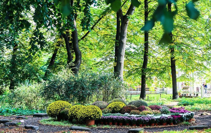 Хризантемы в саду есть, но их выставку собираются провести впервые. Фото Предоставлено пресс-службой