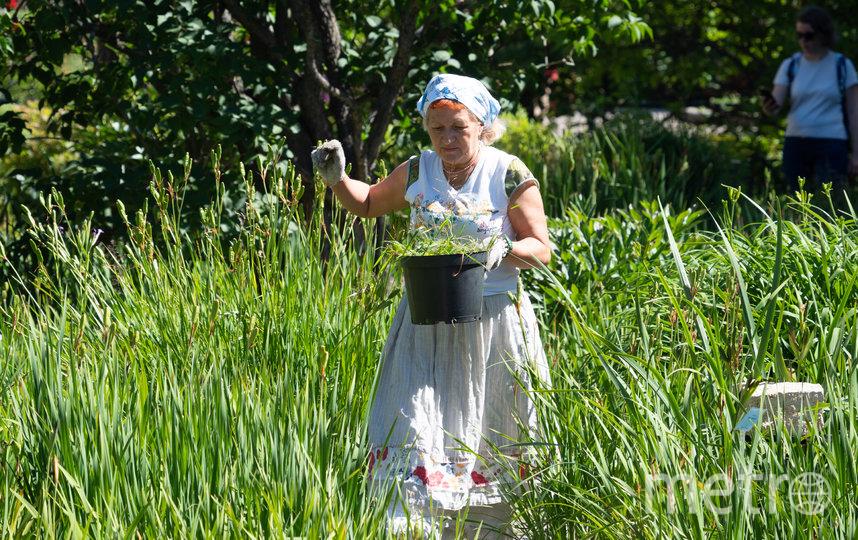 """Волонтёры работают не во всех «зонах» ботанического сада (к примеру, исключение составляют оранжереи) и их не загружают тяжёлым физическим трудом. Но и без того они освобождают от огромного количества работы сотрудников сада. Фото Святослав Акимов, """"Metro"""""""