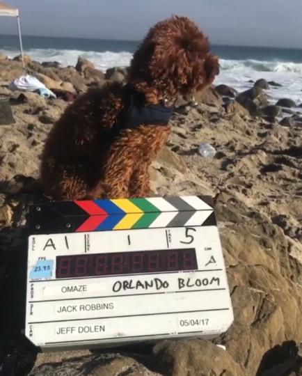 Орландо Блум часто брал Майти с собой в путешествия. Фото instagram @orlandobloom