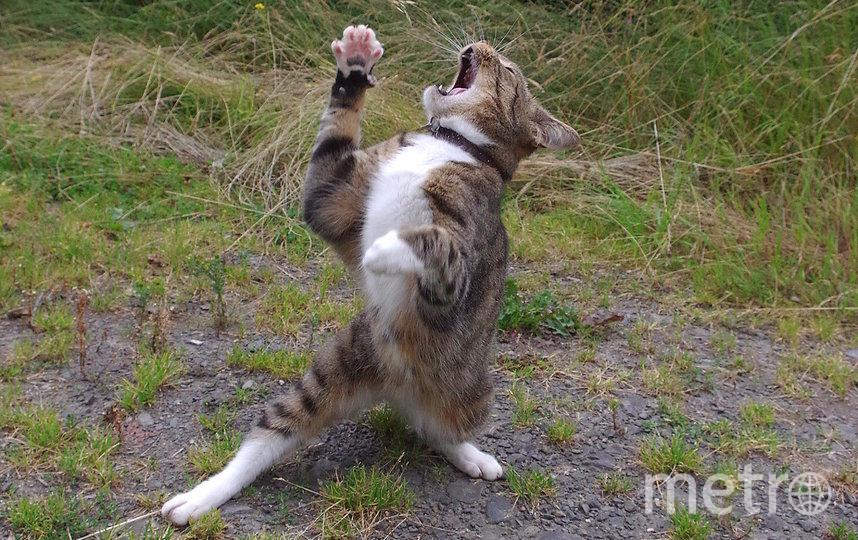 "Фото ""Чересчур драматичный кот"". Фото Iain Mcconnell / Comedy Pet Photo Awards 2020"