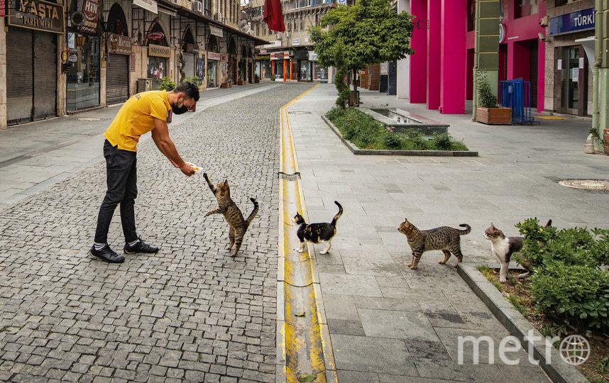 """Фото """"Заказ еды по правилам социального дистанцирования"""". Фото Mehmet Aslan / Comedy Pet Photo Awards 2020"""