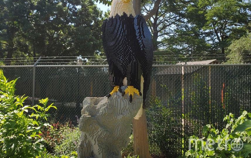 Скульптура белоголового орлана. Фото San Antonio Zoo