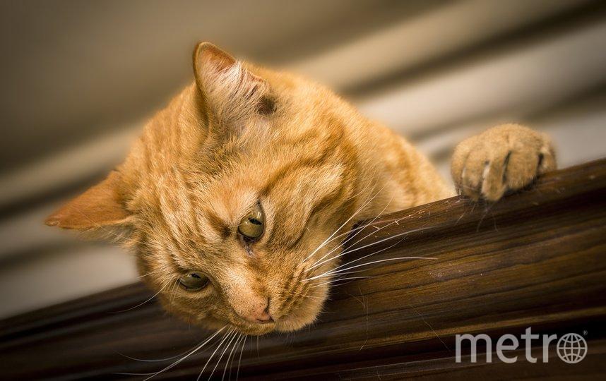 Коты стали яблоком раздора в Калининграде. Фото – архив. Фото pixabay