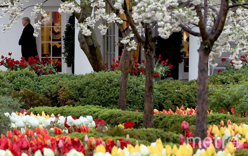 Реставрация исторического Розового сада – долгожданный проект, призванный улучшить одно из самых знаковых мест на территории Белого дома. Архивное фото. Фото AFP