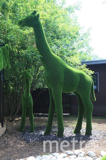 """Семья жирафов. Фото Василий Кузьмичёнок, """"Metro"""""""