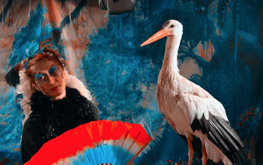 Дрессировщица Ирина Брагина и её питомцы - аисты. Авторский номер. Фото teatrmagic.jimdo.com
