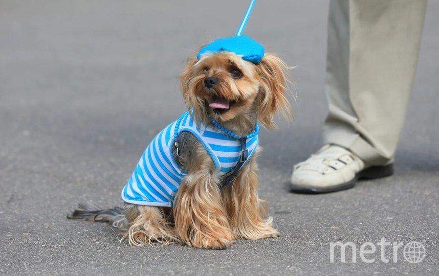 Собачки тоже праздновали День ВДВ. Фото Василий Кузьмичёнок