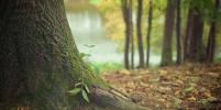 В Сыктывкаре спасатели отыскали в лесу семью с ребёнком