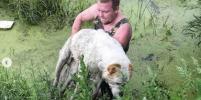 Житель Иркутска, доставший из болота алабая, не раз спасал детей